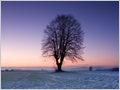 An old Tilia tree among the frosty fields of Spodnji Brnik, Gorenjska, Slovenia.