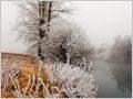 Frosty trees and bushes along the river Ljubljanica flowing through Ljubljana Marshes, Ljubljana, Slovenia.