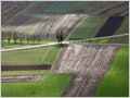 Fields on Cerkljansko polje after the autumn rain, Pšata, Slovenia.