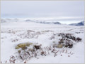 Snowy plains in Rondane national park, Norway.