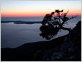 A late evening silhouette of an Evergreen Oak (Quercus Ilex) tree growing on island od Lošinj, Kvarner, Croatia.
