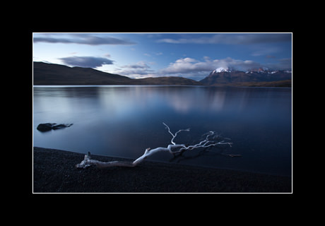 A barkless Lenga beech (Nothofagus pumilio) branch is all that remains of dense forests burned down to expand pastureland, Laguna Azul, Torres del Paine National Park, Chile.