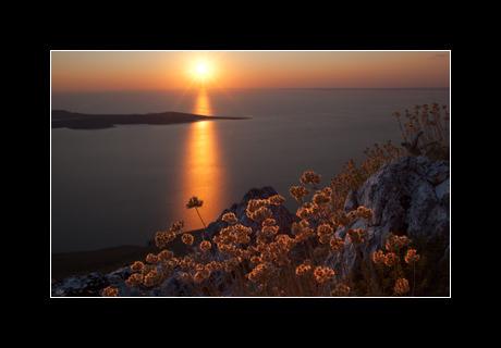 Dried mediterranean plants backlit by the late afternoon sun on top of Osorščica, the highest peak on the island of Lošinj, Kvarner, Croatia.