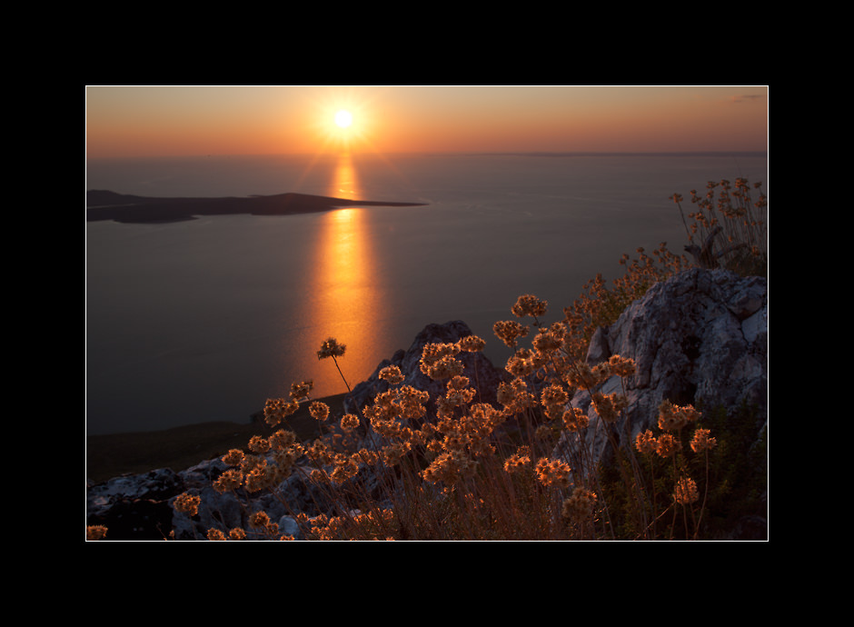 Dried mediterranean plants backlit by the late afternoon sun on top of Osorščica, the highest peak on the island of Lošinj, Kvarner, Croatia.