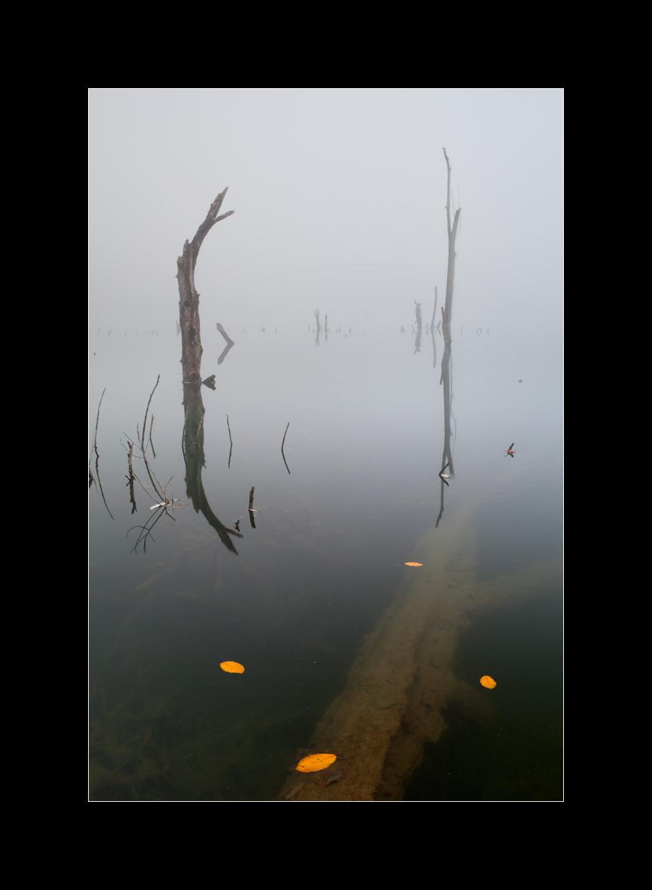 A foggy landscape of dead tree trunks in the pond near Vrhnika, Slovenia.