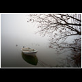 Tree branches reaching out towards the boat anchored in the calm waters of a pond near Vrhnika, Slovenia.