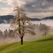 Cherry trees in full blossom on a green spring meadow above Gabrška Gora, Škofjeloško hribovje, Slovenia.